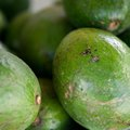 How to Keep Avocados From Ripening Fast