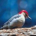 Is Cornbread Safe to Feed Wild Birds?