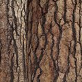 How to Apply a Bark Wall Texture