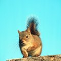 What Kinds of Plants Do Squirrels Hate?