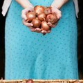 How to Grow Shallots in Containers