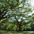 How to Spray Round-Up Around Tree Roots