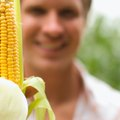 Once Corn Tassles, How Long Until the Cobs Are Ripe?