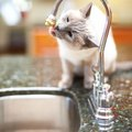 How to Get the Cat Pee Smell Out of Your Sink