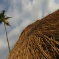 How to Build a Palm Frond Roof
