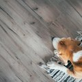 How to Treat Subflooring for Pet Odor and Stains Before Installing New Flooring
