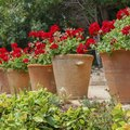 How to Protect Terra Cotta Pots for Outdoor Use