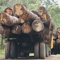 What Is FSC-Certified Wood?
