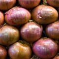 The Life Cycle of an Onion Plant