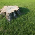 How to Paint to Stop Stump Growth