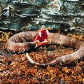 How to Get Rid of Water Moccasins