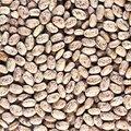 Fast Germinating Bean Plants