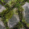 How to Clean Moss From a Brick Patio With Bleach