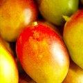Can I Grow a Mango Tree From a Neighbor's Tree?
