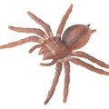 The Best Ways to Kill Spiders