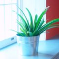 Remedy for Smelly Soil in Indoor Plants