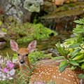 How to Deter Deer With Irish Spring Soap