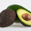 Can Avocado Trees Grow in Oregon?