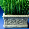 How to Seal Concrete Planters So Plants Don't Die