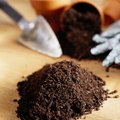 How to Plant Areca Palm Seeds