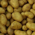 Can You Store Potatoes in the Refrigerator?