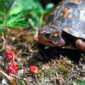 How to Identify Texas Wild Berries