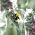 Homemade Bumble Bee Killer