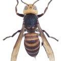 How to Neutralize Raid Wasp Spray