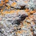 How to Identify Orange Mold