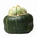 How to Tell When a Buttercup Squash Is Ripe