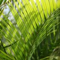 Are Palm Tree Seeds Toxic?