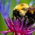 How to Get Rid of Bumble Bees Naturally