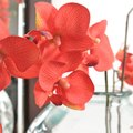 How to Keep Orchids Fresh When Cut