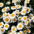 What Flowers & Plants Come Back Every Year?