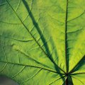 Which Organs or Parts of the Plant Are Involved in Transpiration?