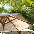 Umbrellas for Plants
