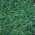 How to Grow New Grass Fast