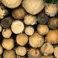 How to Preserve Untreated Wood Organically
