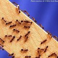How to Get Rid of an Ant Infestation