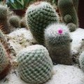 How to Grow Cacti From Seed