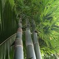How to Make Bamboo Grow Faster