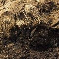 How to Make Compost Activators
