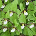 Endangered Tropical Rainforest Plants