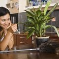 Is Hot Water Bad for Plants?