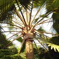 What Is an Ita Palm?