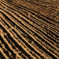 How to Prepare a Field for Planting With a Tractor