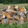 How to Identify a Type of Fire Wood