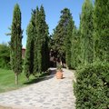 How to Landscape With Italian Cypress