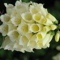Flowers That Look Like Bells