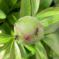 Outdoor Plants That Repel Ants